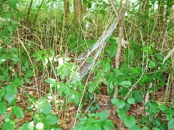 side of web in forest garden