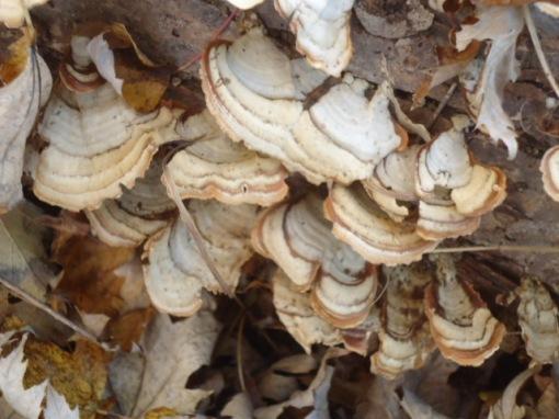 Log Lichen